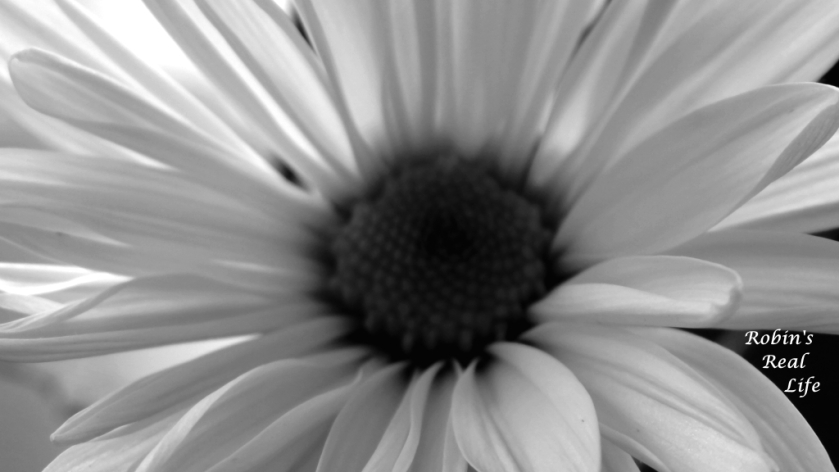 Black And White Daisy Watermark