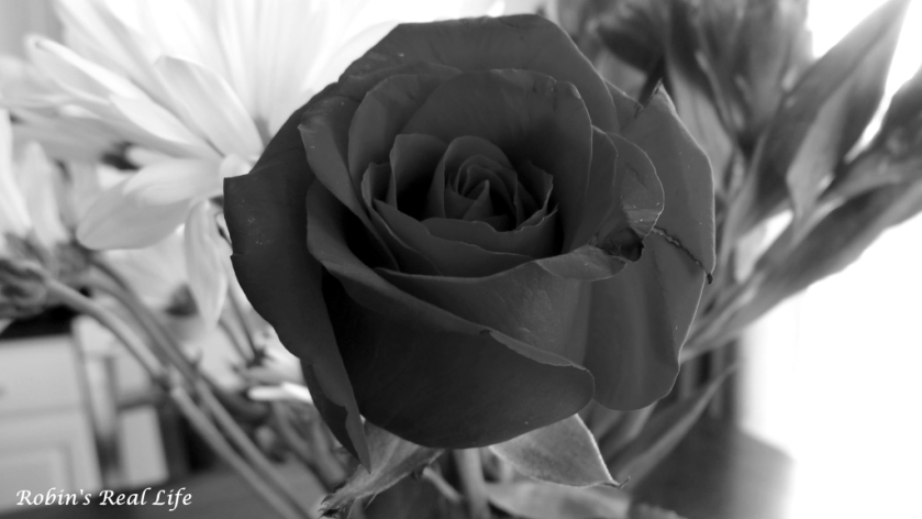 Black and White Rose 2 Watermark