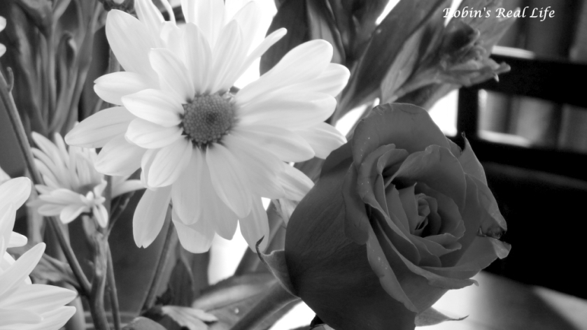 Black and White Rose and Daisy 2 Watermark